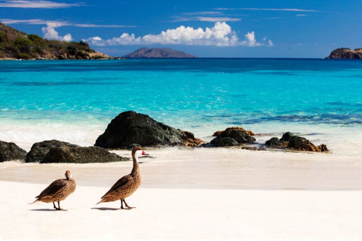 Want to enjoy that Caribbean experience? The US Virgin Islands has got something for you
